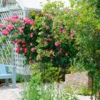 バラの庭(いすみ市 空の音ガーデン)