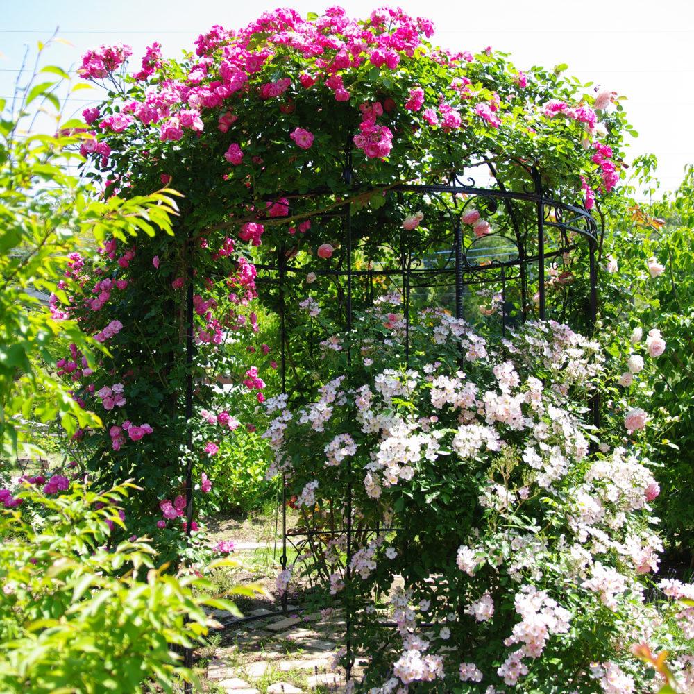 古民家とバラの庭